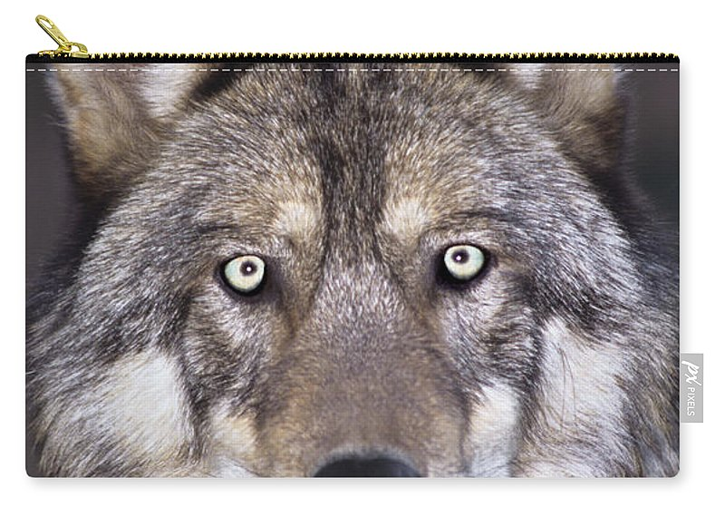 Gray Wolf Carry-all Pouch featuring the photograph Gray Wolf Portrait Endangered Species Wildlife Rescue by Dave Welling