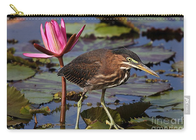 Green Heron Carry-all Pouch featuring the photograph Green Heron Photo by Meg Rousher