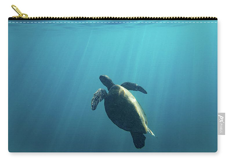 Photography Carry-all Pouch featuring the photograph Green Sea Turtle Swimming by Animal Images
