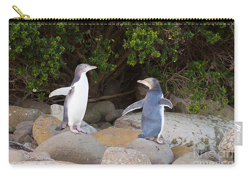 South Island Carry-all Pouch featuring the photograph Juvenile Nz Yellow-eyed Penguins Or Hoiho On Shore by Stephan Pietzko