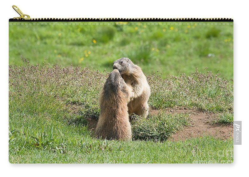 Marmot Carry-all Pouch featuring the photograph Marmots by Antonio Scarpi