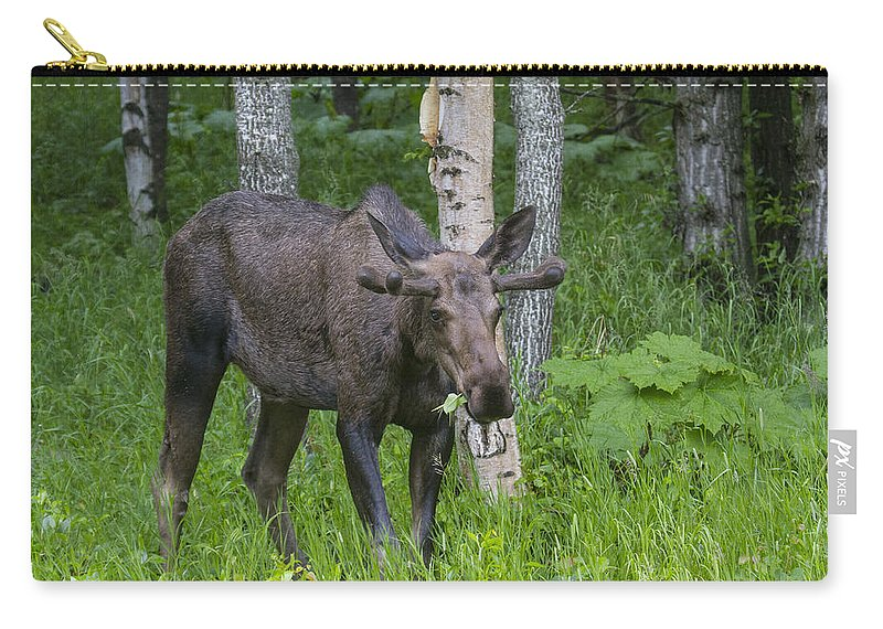 Doug Lloyd Carry-all Pouch featuring the photograph Morning Snack by Doug Lloyd