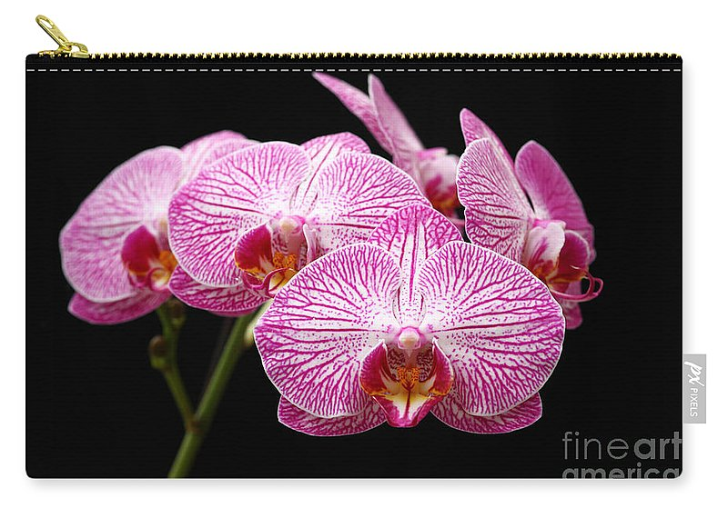 Moth Orchid Carry-all Pouch featuring the photograph Moth Orchid by James Brunker