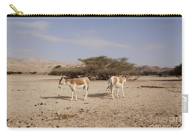 Wildlife Carry-all Pouch featuring the photograph Onager Equus Hemionus by Eyal Bartov