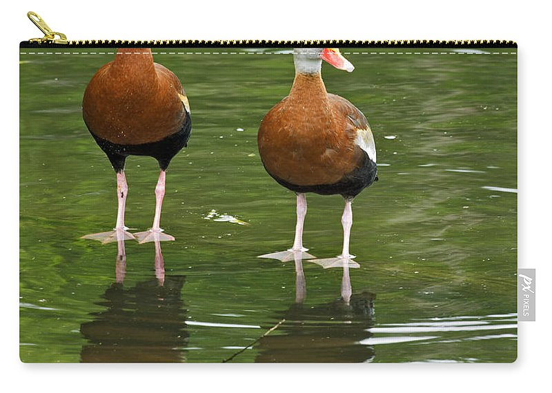 Black Carry-all Pouch featuring the photograph Pair Black-bellied Whistling-ducks by Gary Langley