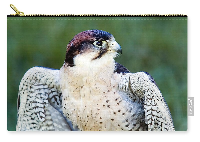 Bars Carry-all Pouch featuring the photograph Peregrine Falcon by Mark Llewellyn
