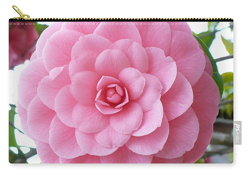 Camellia Carry-all Pouch featuring the photograph Pink Camellia Square by Carol Groenen