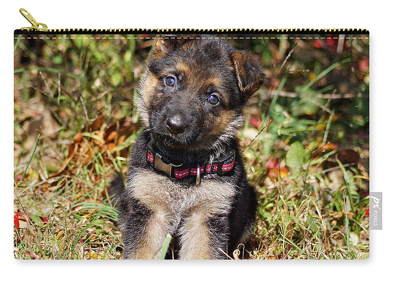 German Shepherd Carry-all Pouch featuring the photograph Pretty Puppy by Sandy Keeton