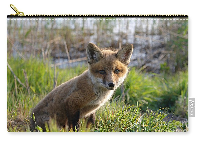 Red Carry-all Pouch featuring the photograph Red Fox Kit by Olivier Le Queinec