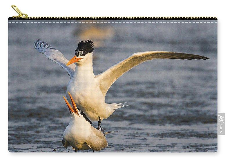Doug Lloyd Carry-all Pouch featuring the photograph Royal Terns by Doug Lloyd