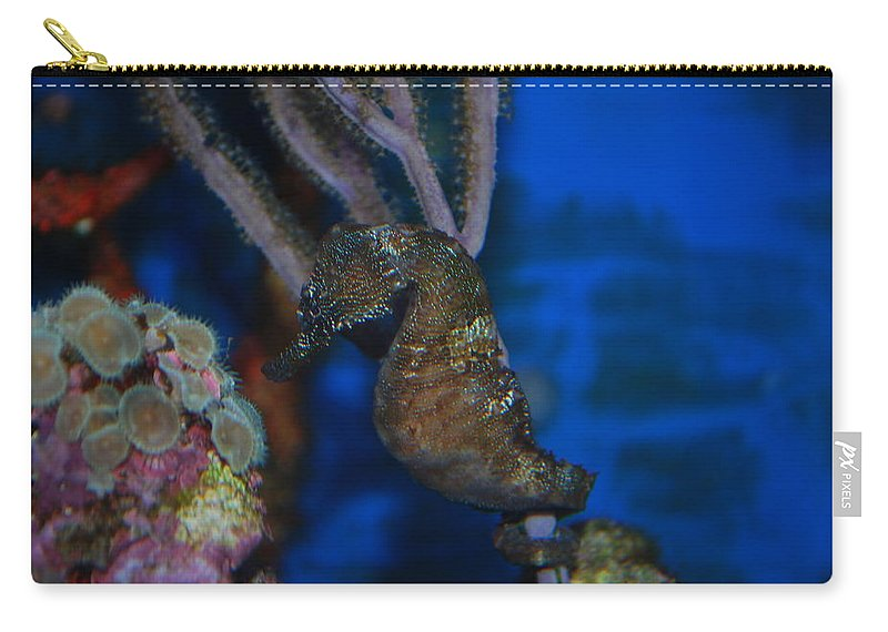 Taken Through Side Of Aquarium Carry-all Pouch featuring the photograph Seahorse And Coral by Robert Floyd