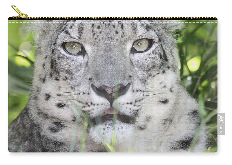 Snow Leopard Carry-all Pouch featuring the photograph Snow Leopard by John Telfer