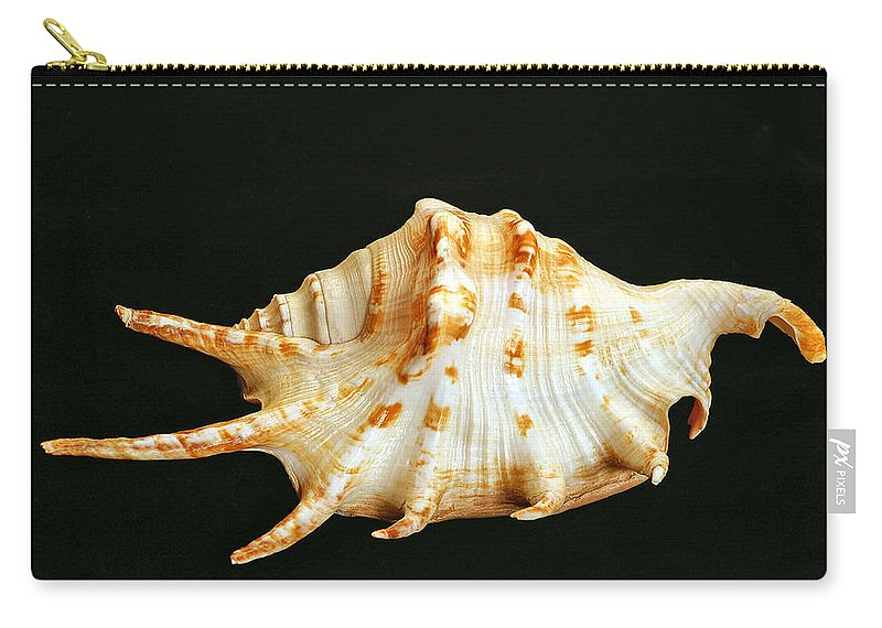 Spider Conch Carry-all Pouch featuring the photograph Spider Conch by Bill Morgenstern