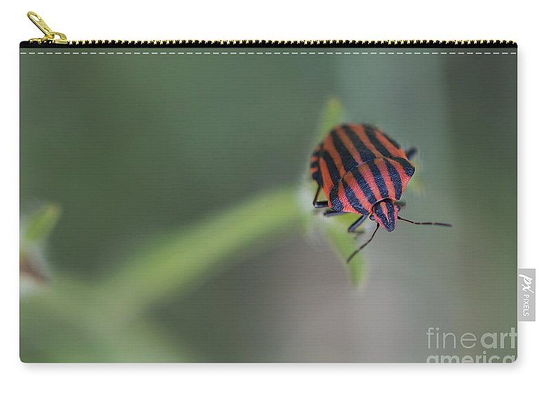 Black-orange Striped Bug Carry-all Pouch featuring the photograph Striped Bug by Jivko Nakev