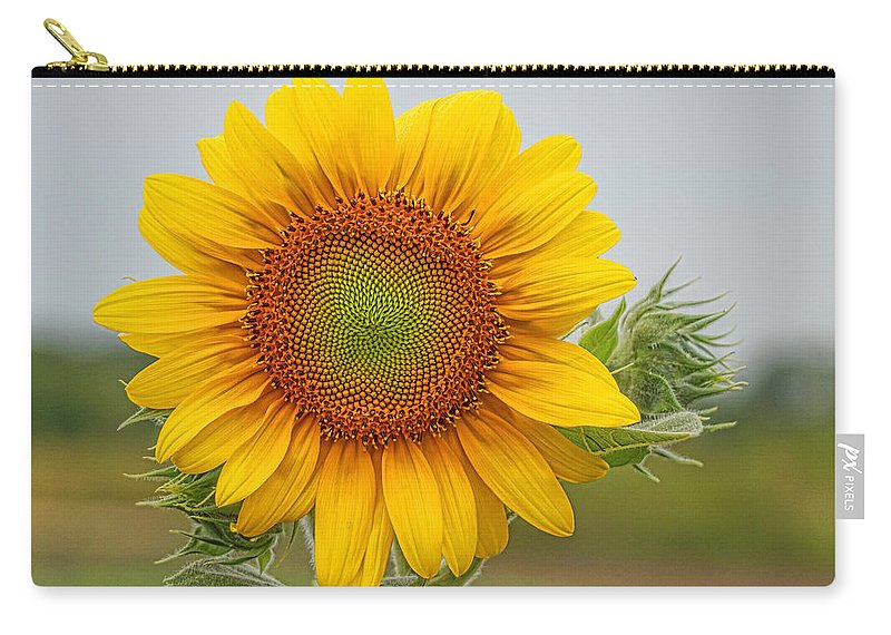 Sunflower Carry-all Pouch featuring the photograph Sunflower by Alan Hutchins