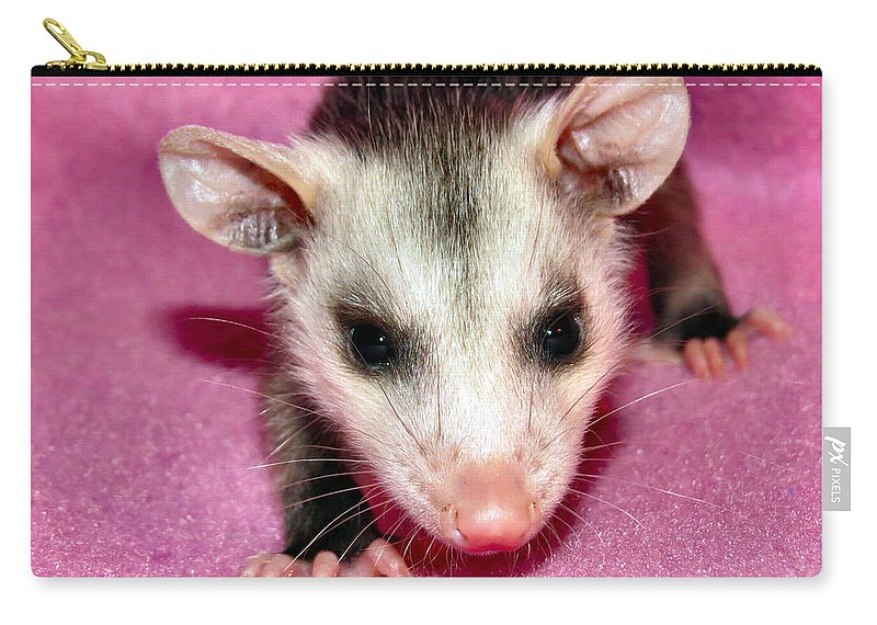 Opossum Carry-all Pouch featuring the photograph Tiny Tim by Art Dingo