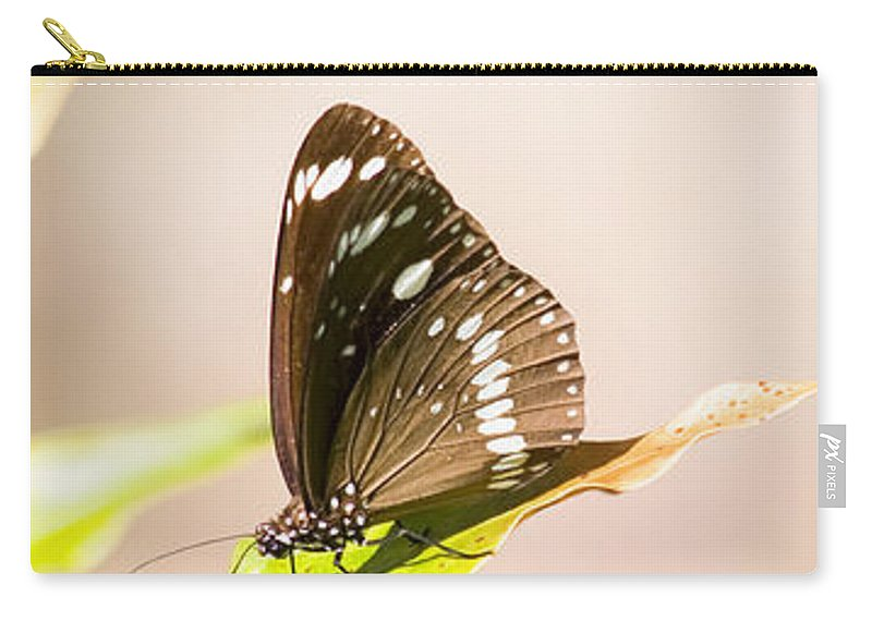Bug Carry-all Pouch featuring the photograph Tropical Butterfly by Jorgo Photography - Wall Art Gallery