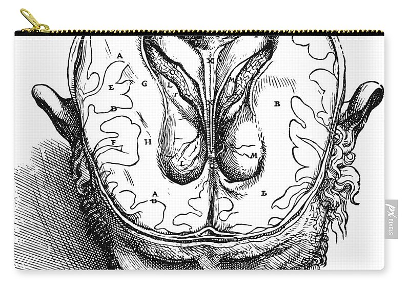 1543 Carry-all Pouch featuring the photograph Vesalius: Brain, 1543 by Granger