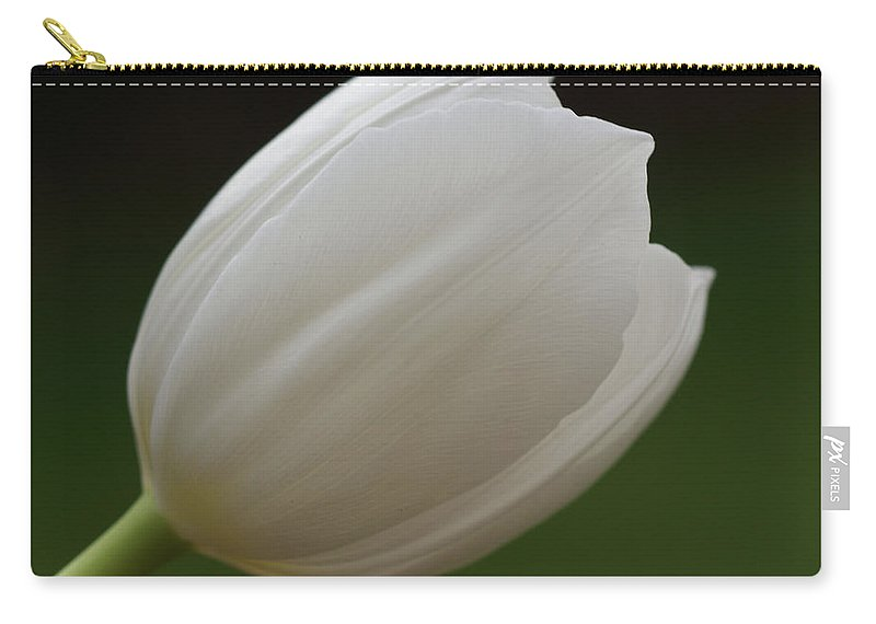 White Carry-all Pouch featuring the photograph White Tulip 1 by Carol Lynch