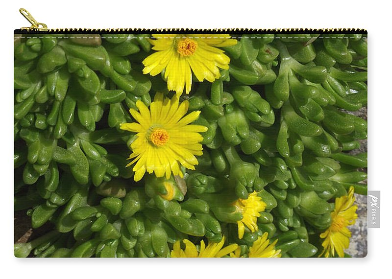 Ice Plant Carry-all Pouch featuring the photograph Yellow Ice Plant In Bloom by Mike and Sharon Mathews