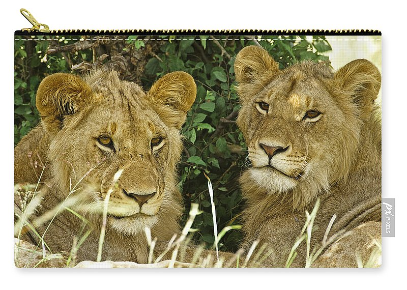 Lion Carry-all Pouch featuring the photograph Young Brothers by Michele Burgess