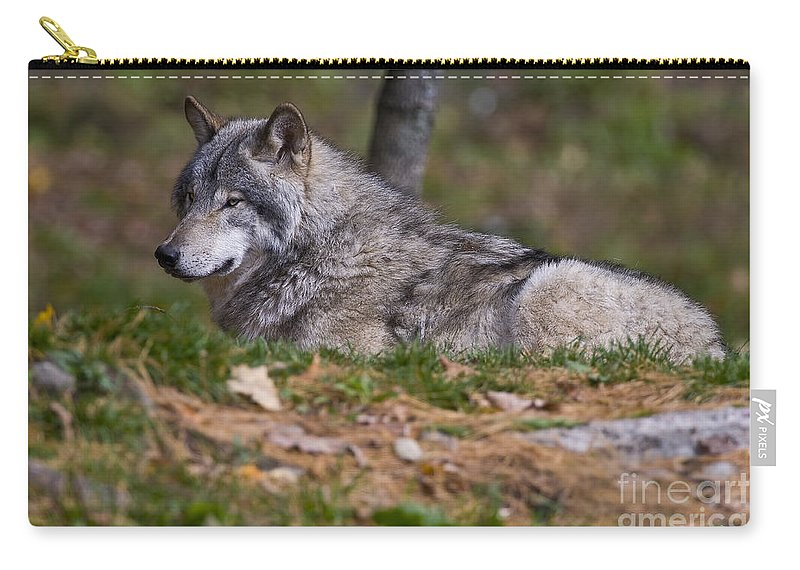 Timber Wolf Photography Carry-all Pouch featuring the photograph Timber Wolf by Wolves Only