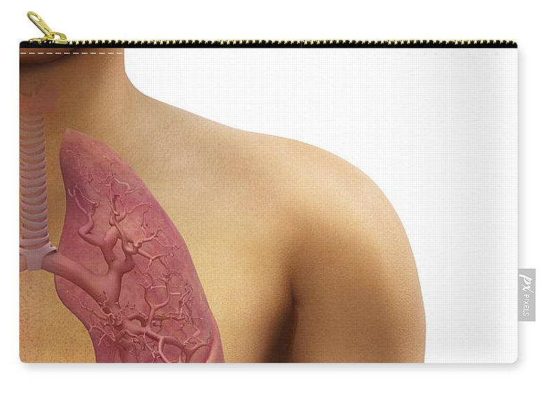 3d Visualisation Carry-all Pouch featuring the photograph The Respiratory System by Science Picture Co
