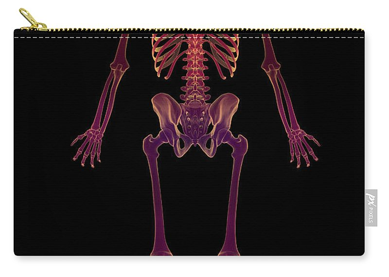 Tibia Carry-all Pouch featuring the photograph The Skeleton by Science Picture Co