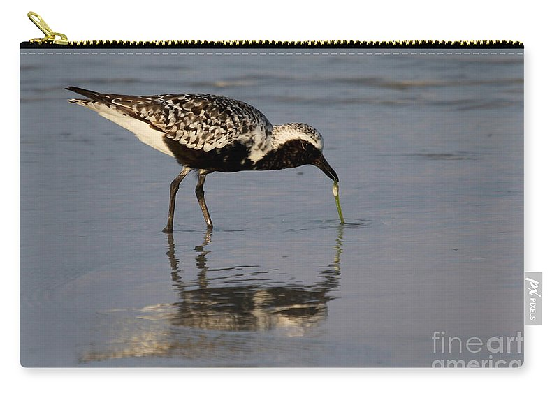 Black-bellied Plover Carry-all Pouch featuring the photograph Black-bellied Plover by Meg Rousher