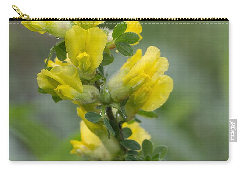Bulgaria Carry-all Pouch featuring the photograph Clustered Broom by Jivko Nakev