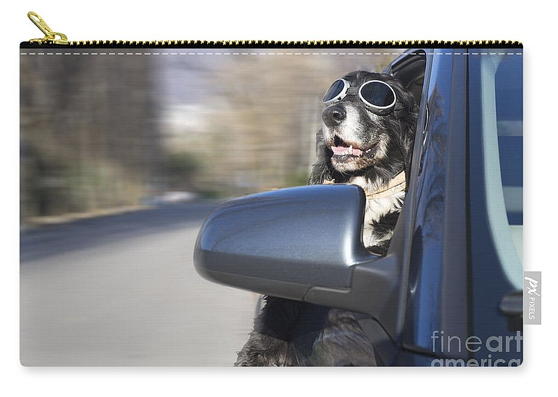 Dog Carry-all Pouch featuring the photograph Cool Dog by Mats Silvan