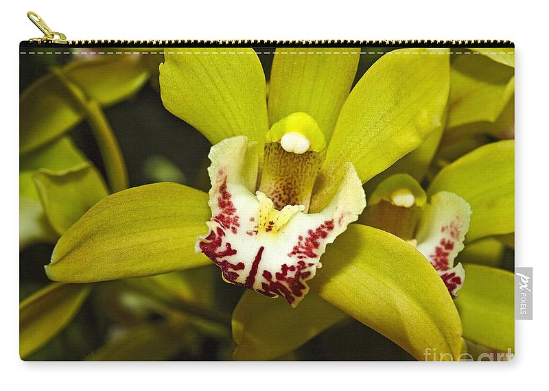 Cymbidium Orchid Carry-all Pouch featuring the photograph Cymbidium Orchid by Howard Stapleton