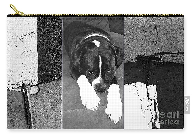 Boxer Carry-all Pouch featuring the photograph Dagger by Marlene Burns