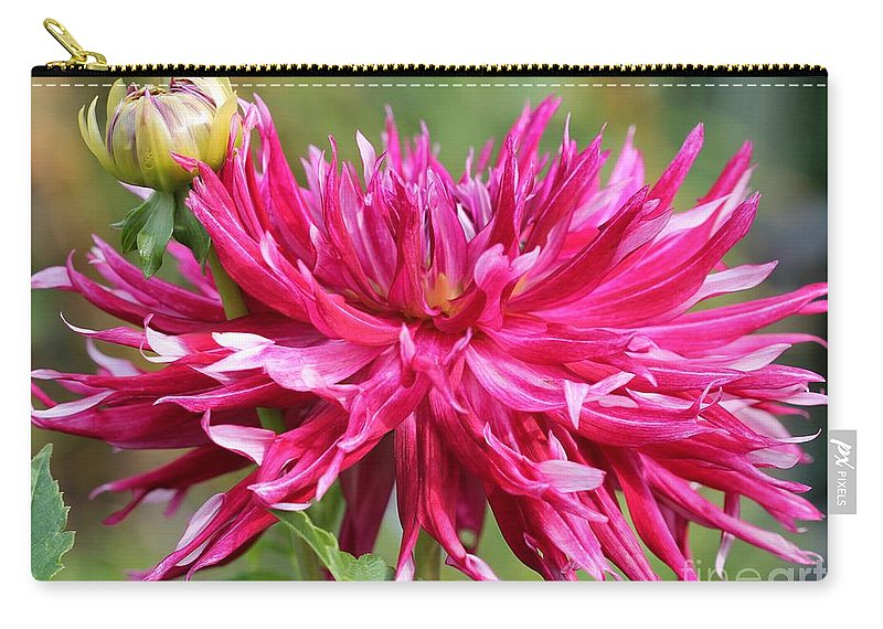 Mccombie Carry-all Pouch featuring the photograph Dahlia Named Normandy Wild Willie by J McCombie