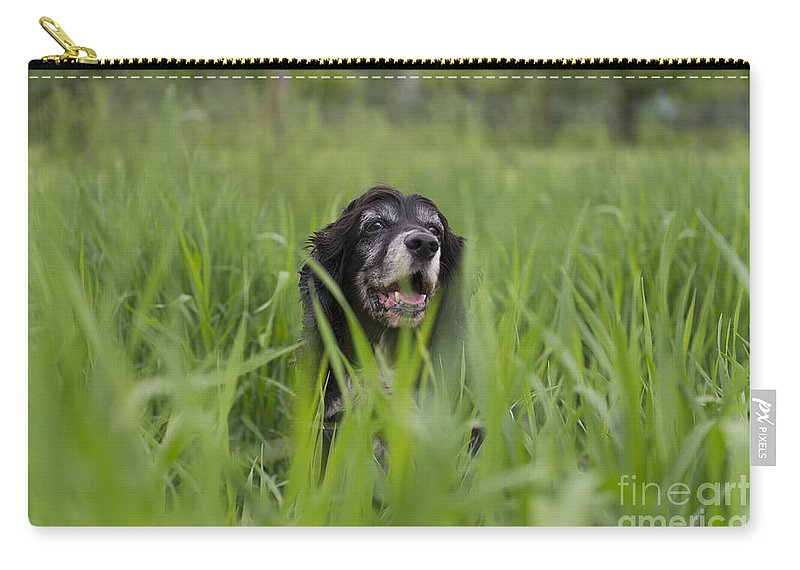 Dog Carry-all Pouch featuring the photograph Dog by Mats Silvan