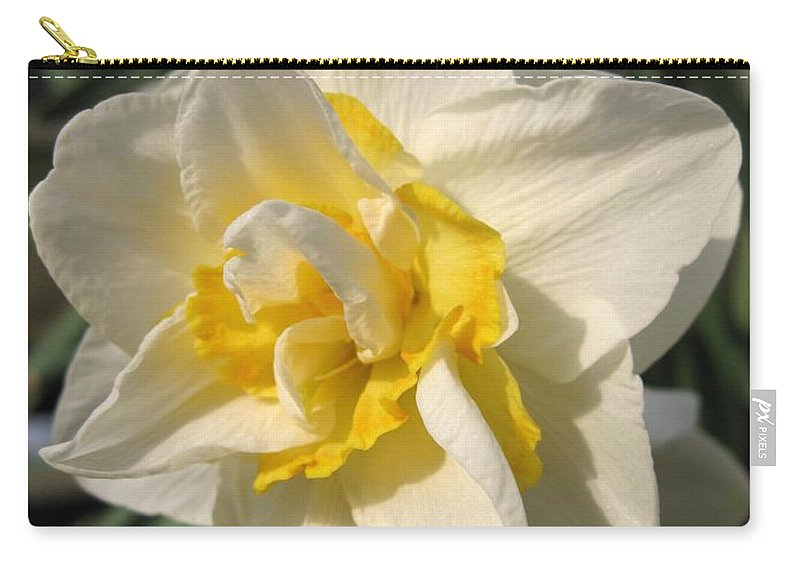 Mccombie Carry-all Pouch featuring the photograph Double Daffodil Named White Lion by J McCombie