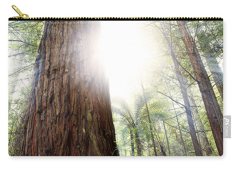 Beauty Carry-all Pouch featuring the photograph Forest Light by Les Cunliffe