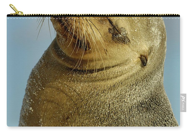 Color Image Carry-all Pouch featuring the photograph Galapagos Sea Lion Zalophus Wollebaeki by Pete Oxford