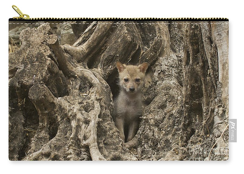 Golden Jackal Carry-all Pouch featuring the photograph Golden Jackal Canis Aureus Cubs by Eyal Bartov