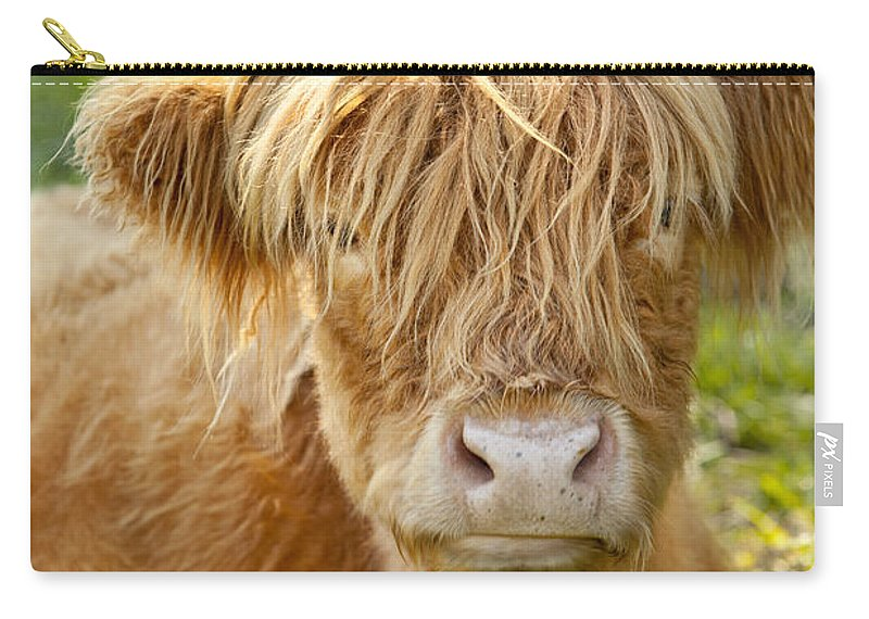 Scottish Carry-all Pouch featuring the photograph Highland Cow by Brian Jannsen
