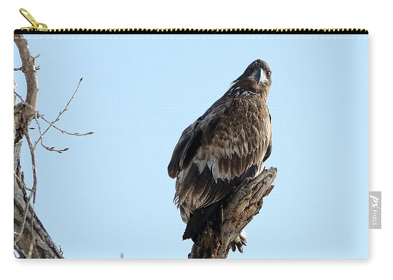 Bald Eagle Carry-all Pouch featuring the photograph Immature Bald Eagle by Lori Tordsen
