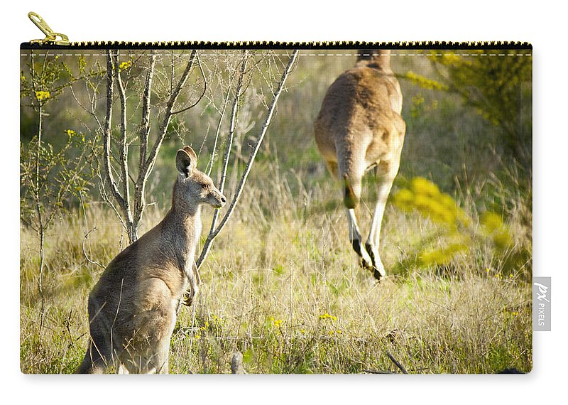 Animal Carry-all Pouch featuring the photograph Kangaroo by Tim Hester