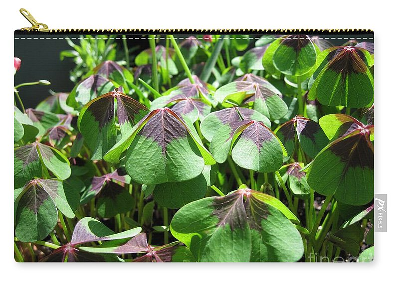 Mccombie Carry-all Pouch featuring the photograph Oxalis Deppei Named Iron Cross by J McCombie