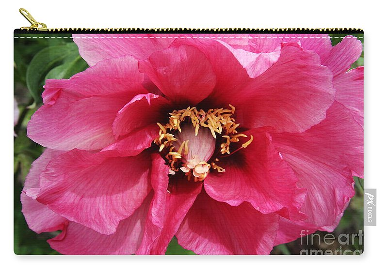 Peonies Carry-all Pouch featuring the photograph Pink Peony by Christiane Schulze Art And Photography