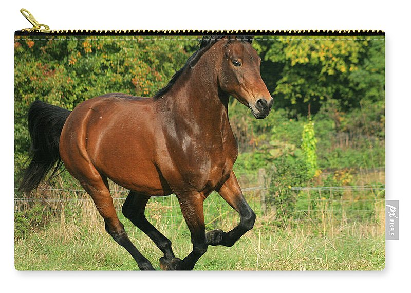 Horse Carry-all Pouch featuring the photograph Running Free by Angel Ciesniarska