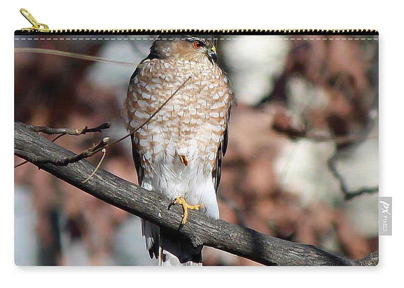 Hawk Carry-all Pouch featuring the photograph Sharp-shinned Hawk 2 by Jamie Smith