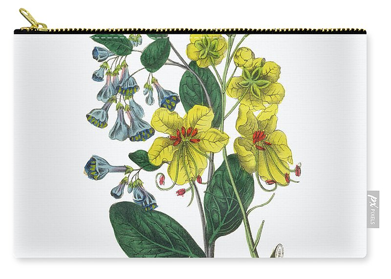 White Background Carry-all Pouch featuring the digital art Victorian Botanical Illustration Of by Bauhaus1000