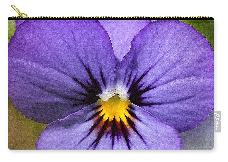 Mccombie Carry-all Pouch featuring the painting Viola Named Sorbet Blue Heaven Jump-up by J McCombie