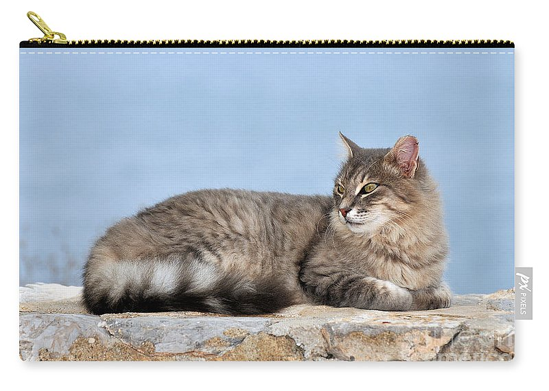 Cat Carry-all Pouch featuring the photograph Cat In Hydra Island by George Atsametakis