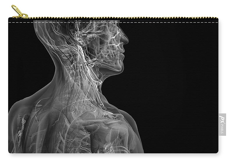 Transparent Carry-all Pouch featuring the photograph Human Anatomy by Science Picture Co